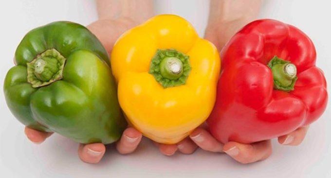 4ª Giornata Salentina del Biologo Nutrizionista:  esperti a disposizione della cittadinanza  in tema di alimentazione e sano stile di vita