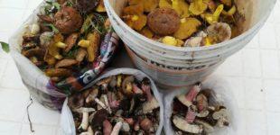 A Portoselvaggio è vietato raccogliere funghi: nei guai in cinque